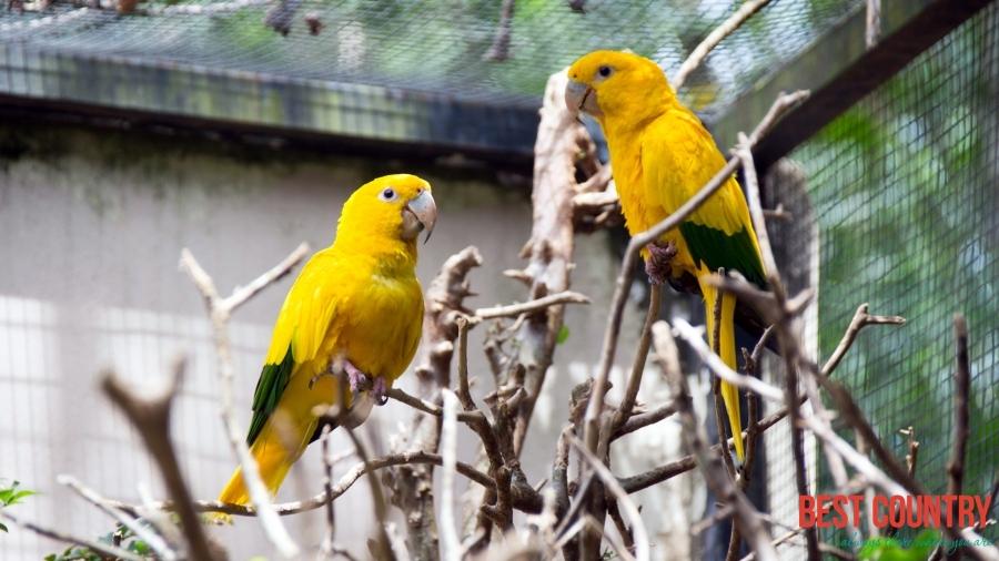 ВИДЕО: Птицы и звери Бразилии