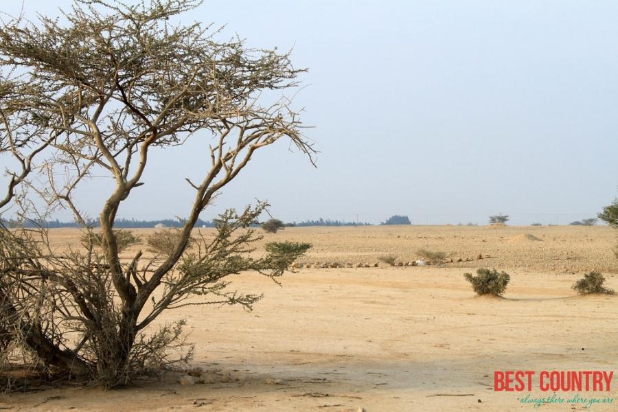 Climate of Qatar